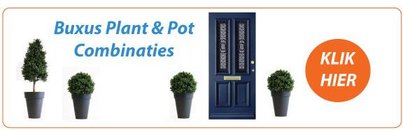 Buxus pot en plant