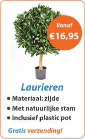 Laurieren