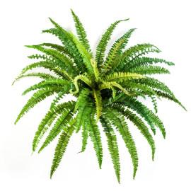 Kunstplant Bos Varen 70 cm