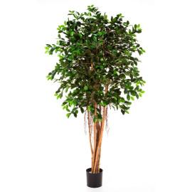 Kunstplant Ficus Retusa 210 cm