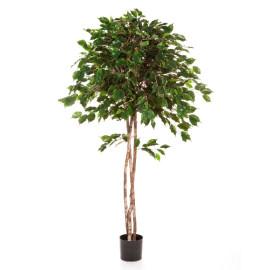 Kunstplant Ficus Umbrella 150 cm