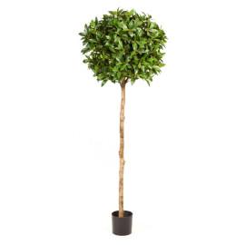 Kunstplant Laurier Bal Deluxe 170 cm