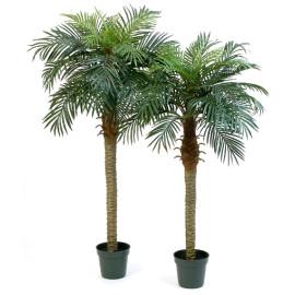 Kunstplant Phoenix Palmboom 180-150 cm