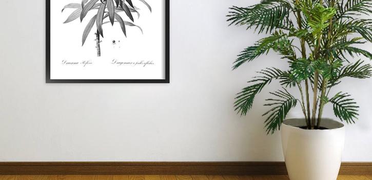 Populairste Kunstplanten