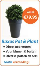 Buxus pot & plant
