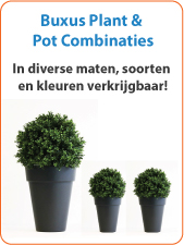 Buxus Plant en Pot Combinaties