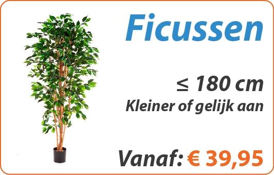 Ficus kunstplanten kleiner of gelijk aan 180 cm