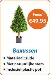 Buxussen