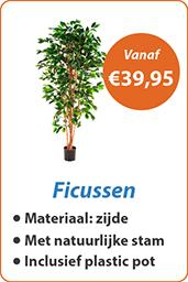 Ficussen