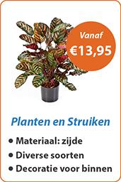 Planten en Struiken