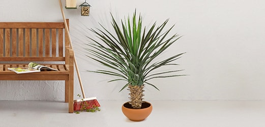 Kunstplanten voor Buiten